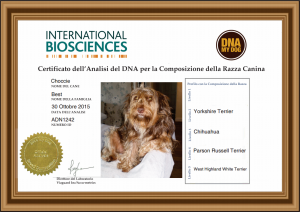 IBDNA IT DNA My Dog Certificate