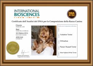 IBDNA IT DNA My Dog Certificate