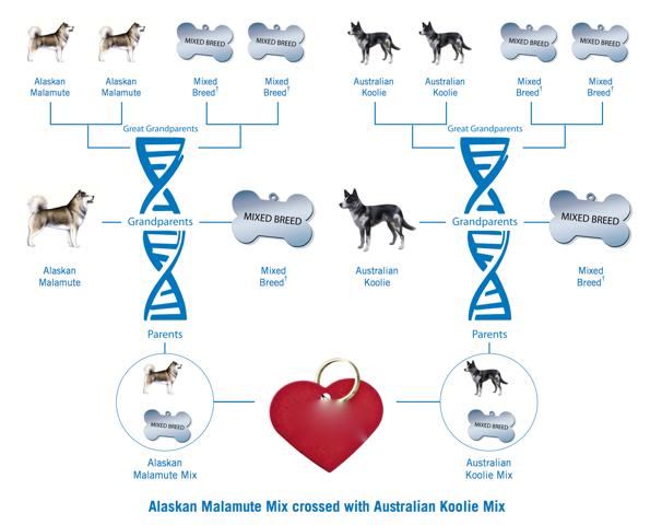 Determinazione della razza del proprio cane: il metodo scientifico